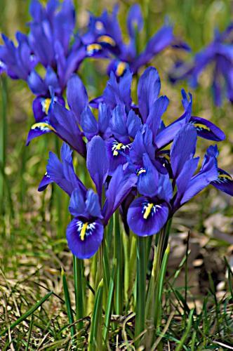 Ithaca Spring