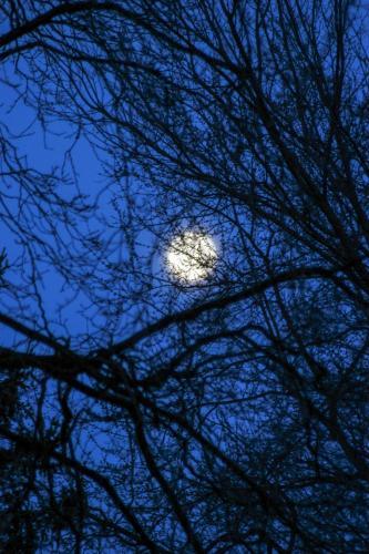 Treed Moon